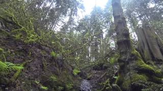 Forest Park Trail-head, Portland, Oregon April 2015
