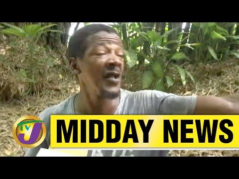 I Am Not A Wimp - says Jamaican Senator L. Brown   TVJ News