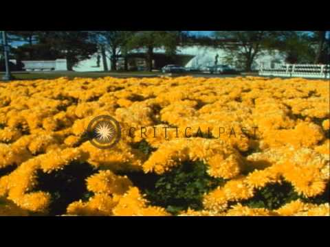 Roosevelt Bridge over Potomac River and flowers in large pots in median strip alo...HD Stock Footage