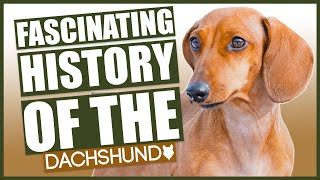 The History Of The DACHSHUND