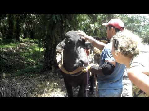 Palm Oil plantation field trip