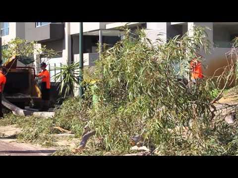 Arborist Brisbane - A Risk Nobody Thinks About