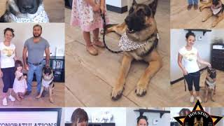 German SHEPHERD dog training Houston Tx Michelob The HDT