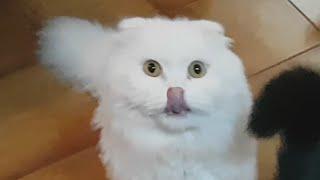 CİVCİV PASTA TARİFİ - Kedilerin karnını acıktıran pasta