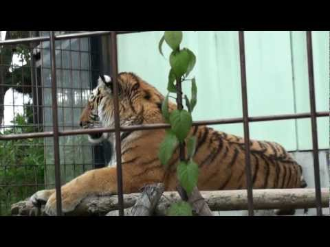 (HD)京都市動物園-Kyoto City Zoo