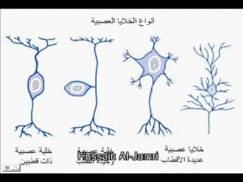 انواع الخلايا العصبية Youtube
