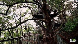 Giant Japanese Treehouse | Treehouse Masters
