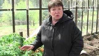 видео Даниловские саженцы