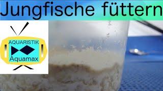 Jungfische füttern, Artemia nauplien züchten#15