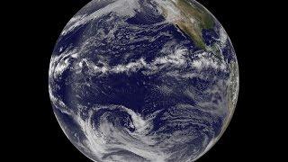 Уровни организации живой материи | От молекулярного до биосферного | ОГЭ и ЕГЭ по биологии [2.0]