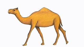 How to draw Camel step by step