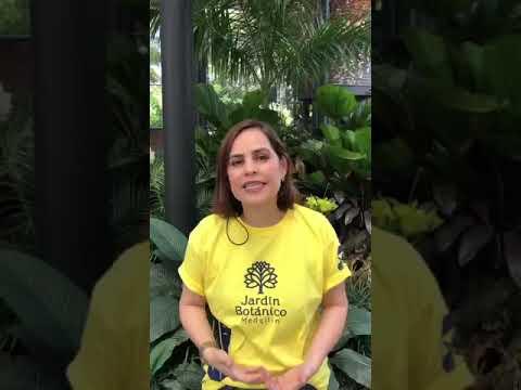 IFMNOTICIAS.COM - DIRECTORA DEL JARDÍN BOTÁNICO CLAUDIA LUCIA GARCÍA DA ALERTA SOBRE EL FUTURO