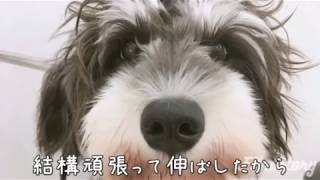 【チャンネル登録】してね! ◇ミニシュナむーらん チャンネル登録 https...