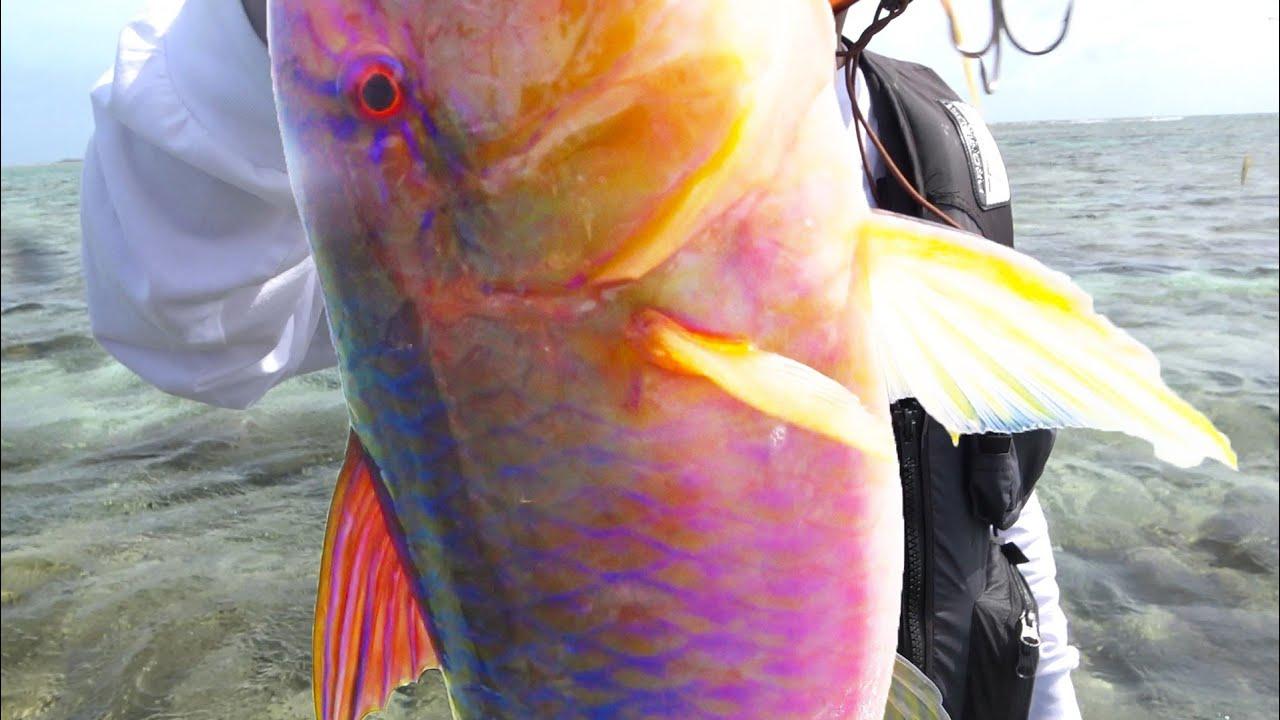 ハニートラップでおじさんを釣りました【伊是名島遠征2020 #5】
