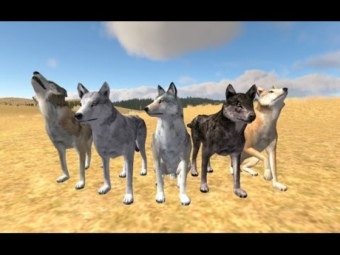 Видео Игры симулятор белки онлайн