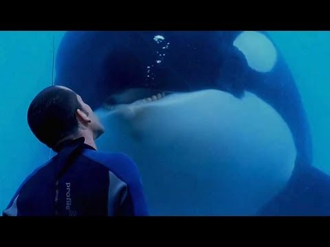 the purpose of investigative journalism in blackfish a documentary film by gabriela cowperthwaite