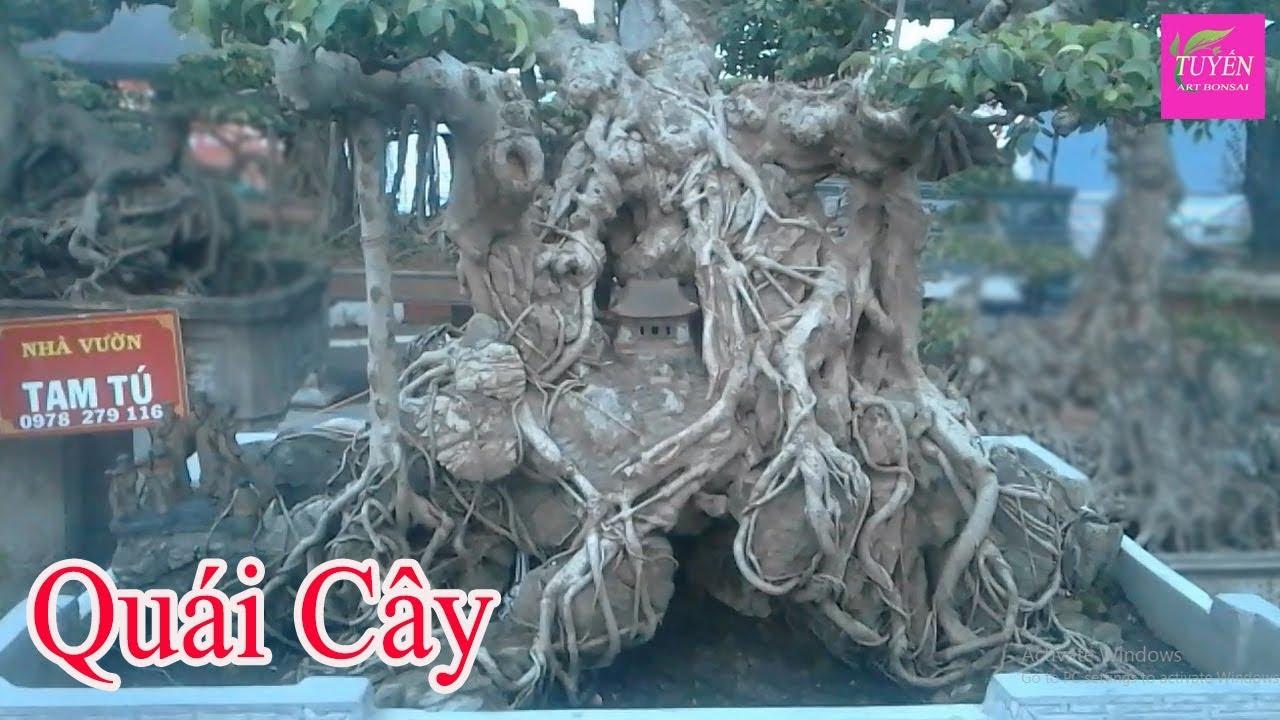 How to bonsai 1,1   Cây cảnh kỳ quái như thế này mới có giá trị cao chứ   Tuyến Bonsai