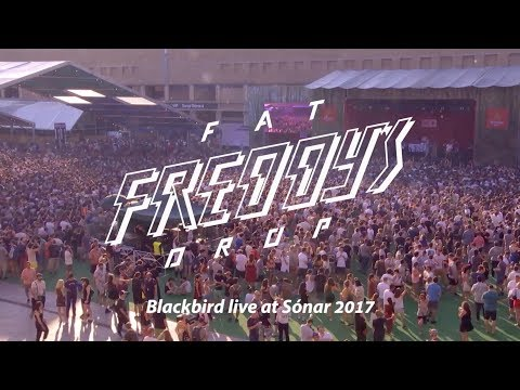 Fat Freddy's Drop Blackbird live at Sonar