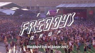 Fat Freddy's Drop Blackbird live at Sónar