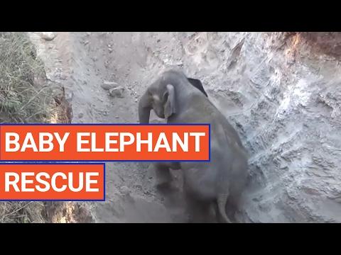 Amazing Elephant Animal Rescue Video 2017   Daily Heart Beat