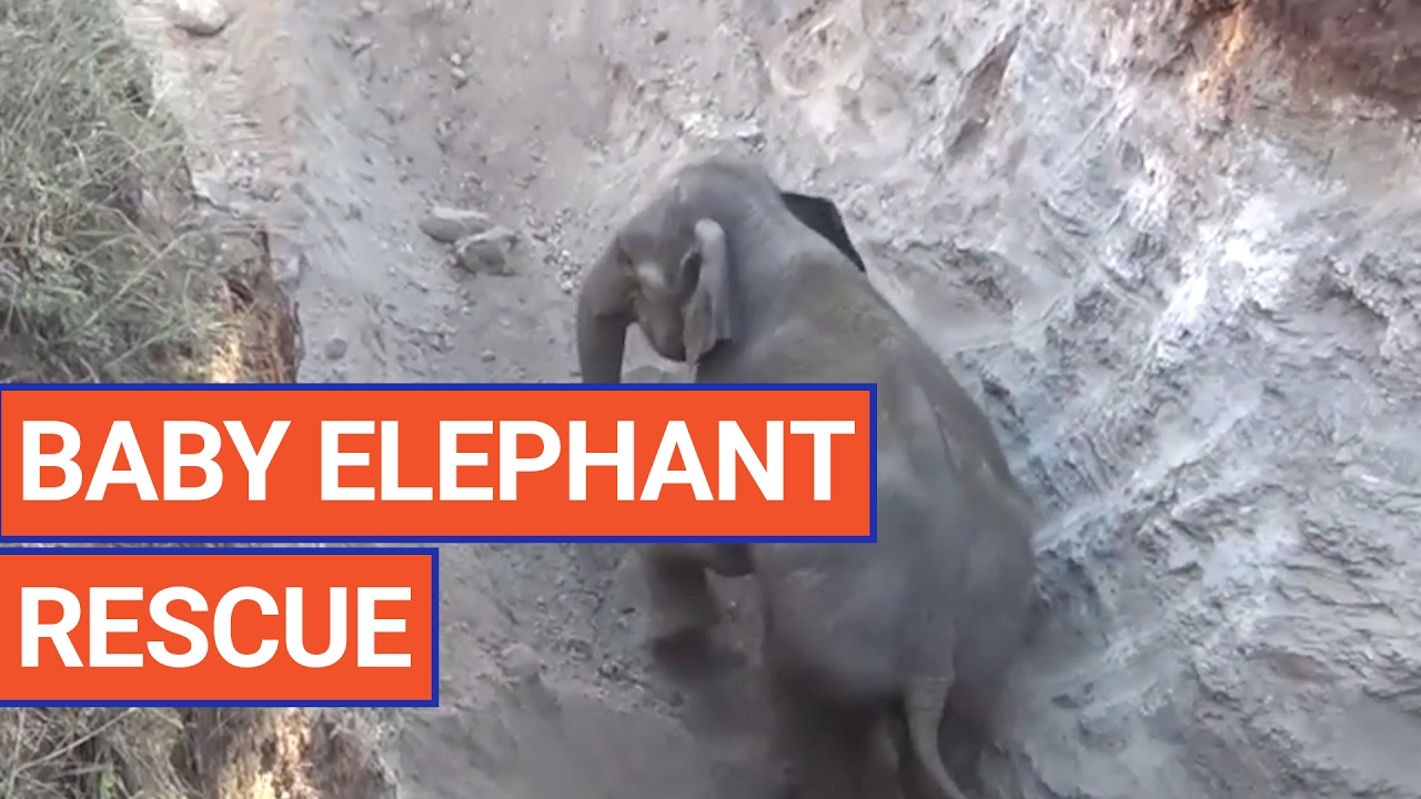 Amazing Elephant Animal Rescue Video 2017 | Daily Heart Beat