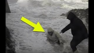 Elderly Couple Is On The Beach When The Unthinkable Happens Out Of Nowhere