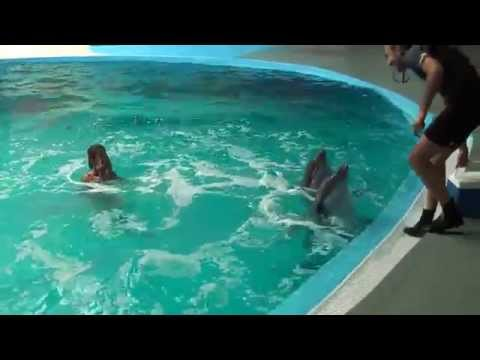 SWIMMING WITH DOLPHINS - ISTANBUL 2014
