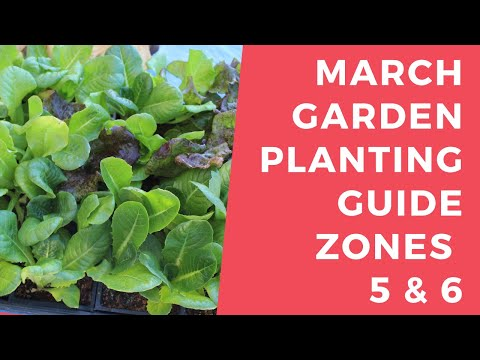 March Planting Guide Zones 5 & 6 - What you should plant in your garden in March