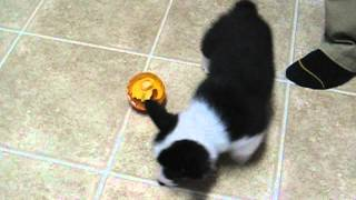 Einstein Using Iq Ball To Eat Dinner