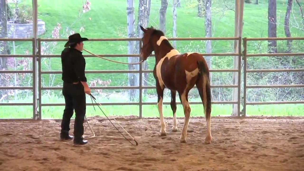 2 Scea Rescue Horse Lunging Sending Yielding To Pressure