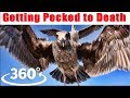 360 Simulation - Getting Pecked to Death