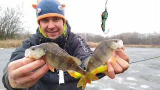ЗИМНЯЯ ловля ОКУНЯ в кувшинках на заливах реки Псёл