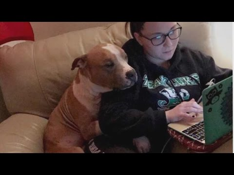 Pit Bull Can't Stop Cuddling With Owner Who Rescued Him From Shelter