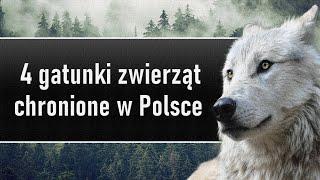 4 gatunki zwierząt chronione w Polsce