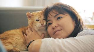 ZumVet - Ninja is a happy cat :)