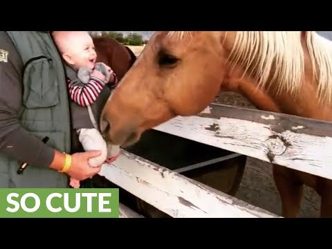 Baby can't stop giggling at friendly horse