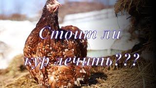 Самое лучшее лекарство для куриц //  Новости// Мое хозяйство