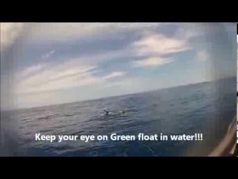 Tiger Shark Attack Australia
