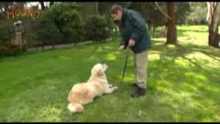 Dog Training-hand Signals Www.sidneyaarons.com.au