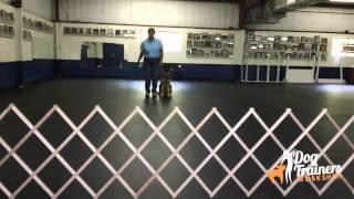 Dog Training - Retrieve On A Flat