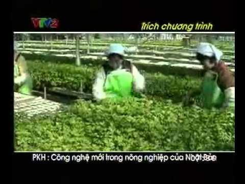 CÔNG NGHỆ THỦY CANH Ở NHẬT BẢN - CHIA SẺ CLIP BỞI CTY THỦY CANH GIA VIÊN