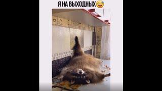 Кошки Собаки Приколы до слёз Смех Смешно Животные Приколы Смешные видео