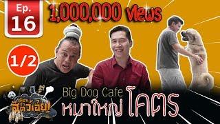 เพื่อนรักสัตว์เอ๊ย-คาเฟ่หมาใหญ่ใจดี-bigdogcafe-l-ep-16