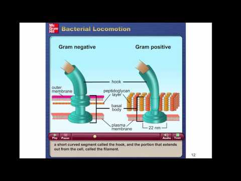 Chapter 4   The Prokaryotes