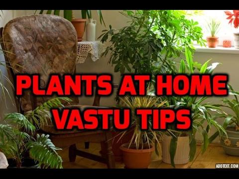 Plants At Home/Vastu Tips (Tamil)/விட்டில் செடிகள் வளர்ப்பு முறை