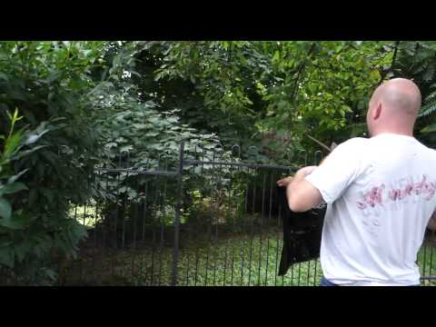 Bald faced hornets nest removal gone wrong (Fail)