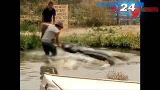 Cudem przeżyli ataki dzikich zwierząt