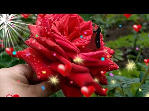 🎵💋Хороший клип с Днем Рождения женщине!💋💐 НОВИНКА🎵