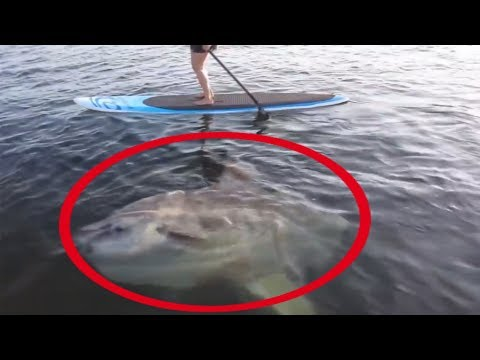 5 BIGGEST Giant Fish | Fishing Moments | Huge Fish Caught On Camera