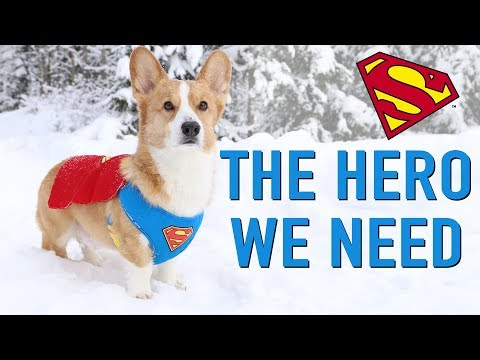 SNOW CHAOS! - Topi the Corgi